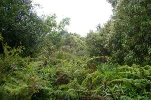 Open Ferny Area