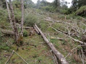 Rough terrain at Planting Site