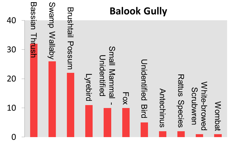 Balook Gully