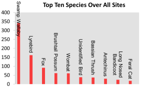 Most Common Species - All Sites