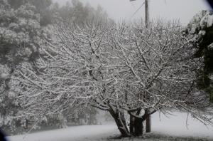 eciduous Tree outside Park.