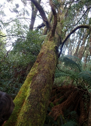 Wider view of the old tree