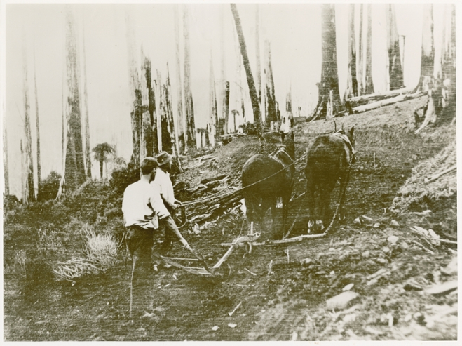 Making a Hill Road (Source: Monash University Centre for Gippsland Studies)