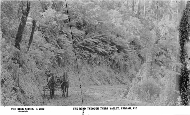 The Road Through Tarra Valley (Source: State Library of Victoria)