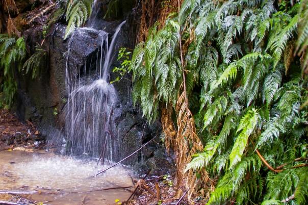 Cascading water along Diapers Tk - Tarra Bulga National Park