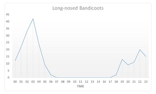 Long-nosed Bandicoots