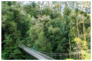 Suspension Bridge in Bulga Park