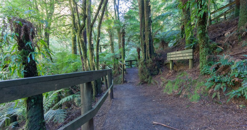 Start of the Fern Gully Loop Track and the Scenic Track.