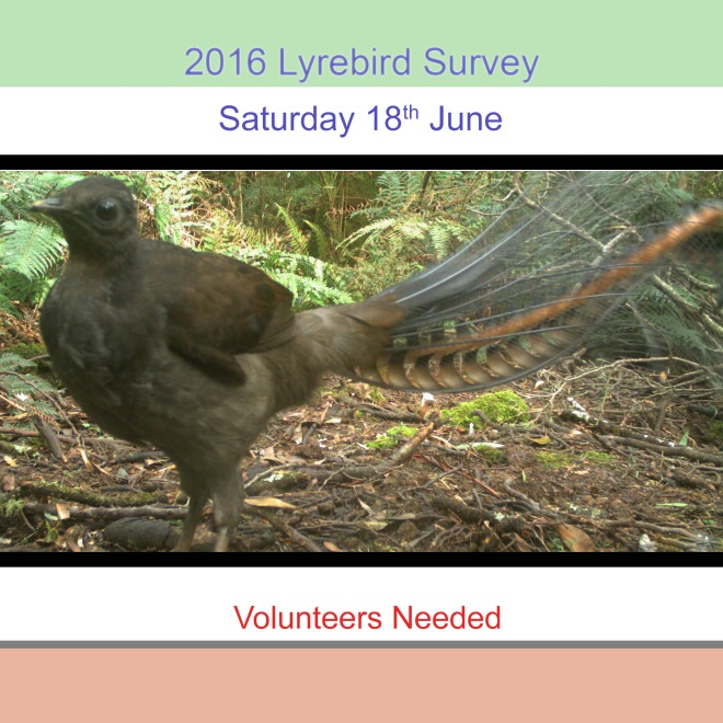 Lyrebird Volunteers